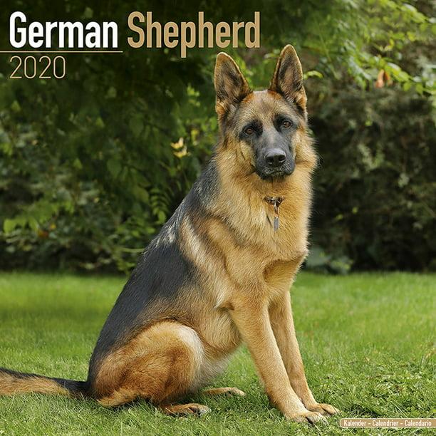 German Shepherd Dog Breed Calendar