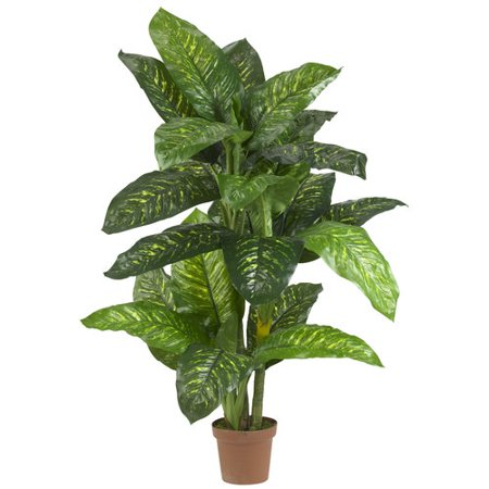 5 Dieffenbachia Silk Plant (Real Touch) Lets be bold today, ok? Because really, youll have no choice when you display this 5 Dieffenbachia Silk Plant. Standing a full 60 tall, this Dieffenbachia has lush leaves shooting off in every direction, making it the perfect entryway piece, or the ideal component to add life to a corner. And hey, its so full, you can hide behind it. Plus, its part of our real touch series, so if feels as good as it looks.SpecificationsHeight: 5 Ft.Width: 34 In.Depth: 34 In.Pot Size: W: 8 in, H: 7 in