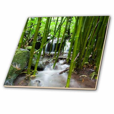 3dRose Flora, Bamboo forest waterfall, Haleakala NP, Maui - US10 JGS0016 - Jim Goldstein - Ceramic Tile, (Maui Jim Bamboo)