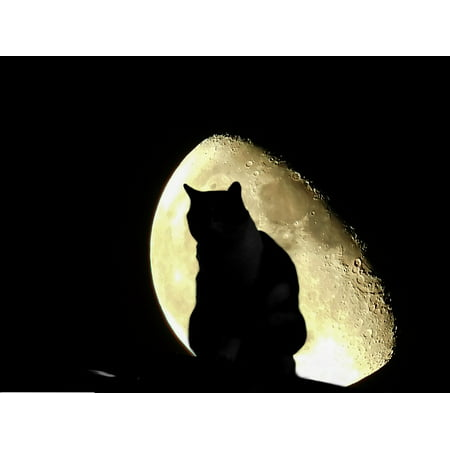 13 Nights Of Halloween Song (Canvas Print Sky Night Sit Halloween Cat Night Sky Moon Fence Stretched Canvas 10 x)