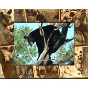 Giftworks Plus BRD0171 Black Bear, Alder Wood Frame, 8 x 10 In