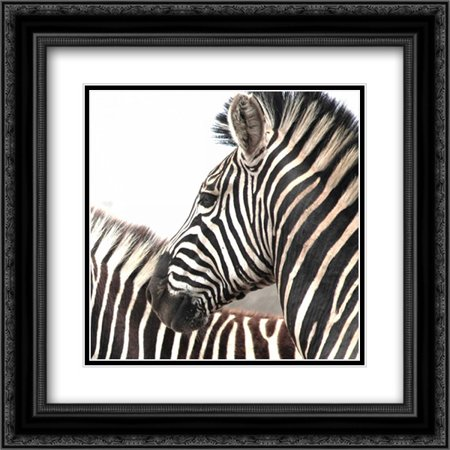 206 Matt - Sarari Zebra V 2x Matted 20x20 Black Ornate Framed Art Print by Underdahl, Dana
