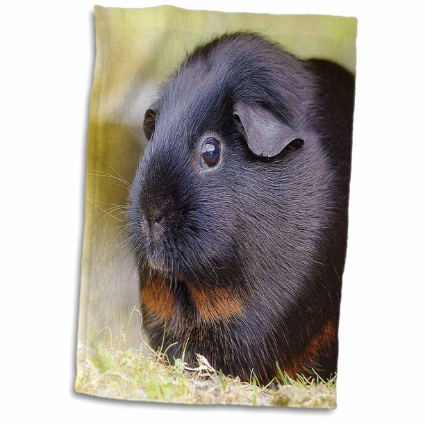 3drose Black Guinea Pig Towel 15 By, Can You Use Microfiber Towels For Guinea Pig Bedding