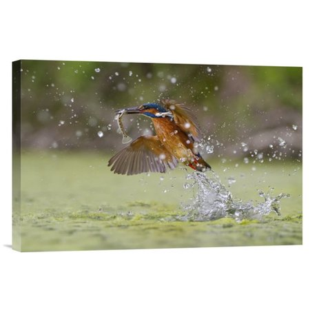 Global Gallery Green Fishing By Marco Redaelli Photographic Print On Wrapped Canvas