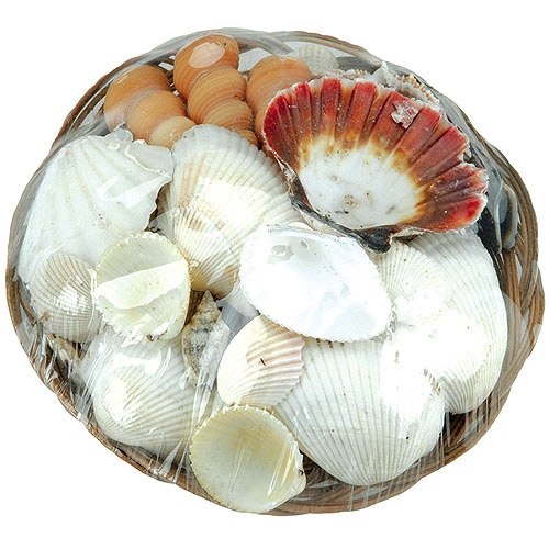 Sea Shell Basket, Natural, 6""