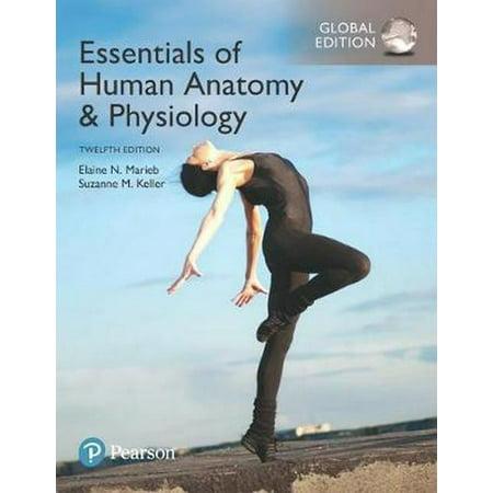 Essentials of Human Anatomy & Physiology, Global (Human Anatomy And Physiology Marieb 5th Edition)