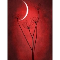 Under the Moon 2 Red Floral Botanical Art Print Wall Art By Philippe Sainte-Laudy