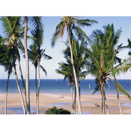 Palm Tree and Tropical Beach on the Coast of Mozambique, Africa Print Wall Art By Groenendijk Peter African Palm Wine