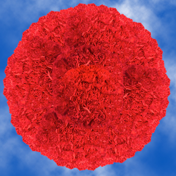 GlobalRose 400 Bulk Red Carnations - Fresh Flowers Wholesale Delivery