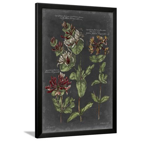 Vintage Botanical Chart IV Framed Print Wall Art By Vision Studio ()