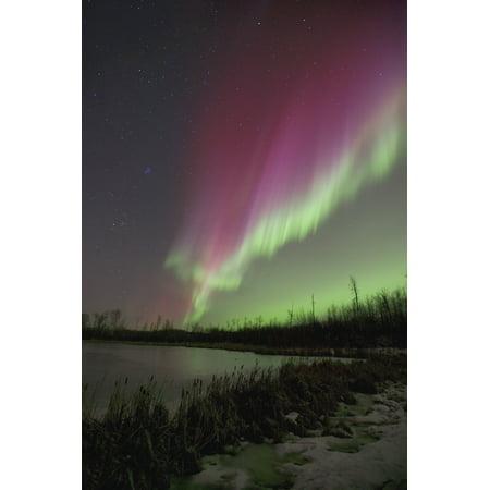 Edmonton 16 Light (Northern Lights Edmonton Alberta Canada PosterPrint )