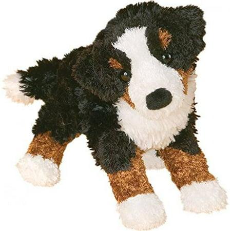 Miranda Bernese Mountain Dog ()