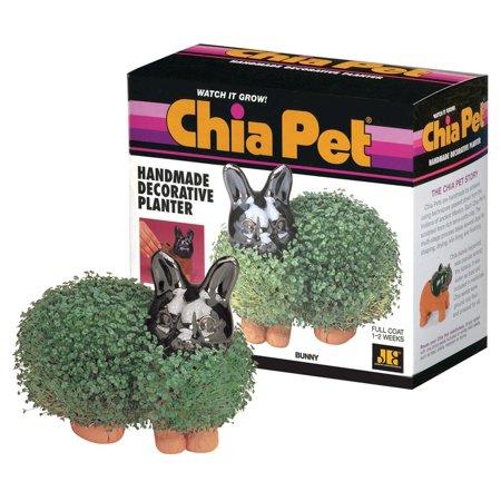 Chia Pet Planter - Bunny - Chia Pet Halloween
