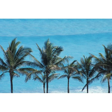 Posterazzi Mexico Quintana Roo Palm trees with turquoise sea Cancun Canvas Art - Carlos Sanchez Pereyra  Design Pics (38 x 24)