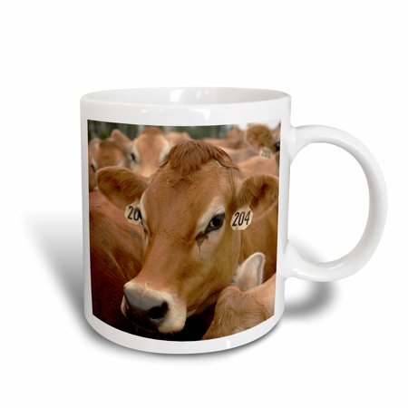 3dRose Jersey Dairy Cows, Rib Lake, Wisconsin - US50 KRS0004 - Keith and Rebecca Snell, Ceramic Mug, 11-ounce