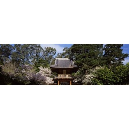 Cherry Blossom trees in a garden Japanese Tea Garden Golden Gate Park San Francisco California USA Stretched Canvas - Panoramic Images (18 x