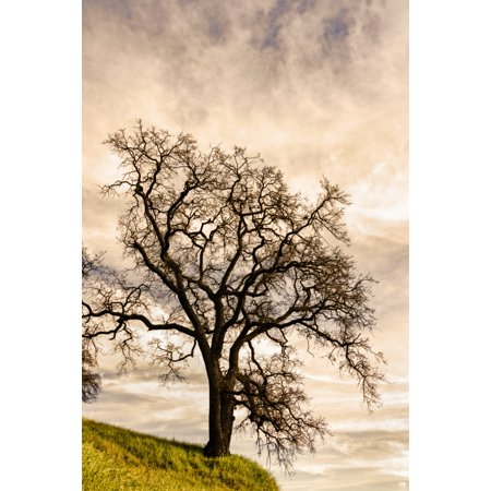 Clouds over Oak tree California USA Poster Print