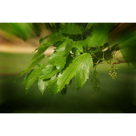 LAMINATED POSTER Rays Tone In Tone Plant Nature Green Leaf Beauty Poster Print 24 x 36