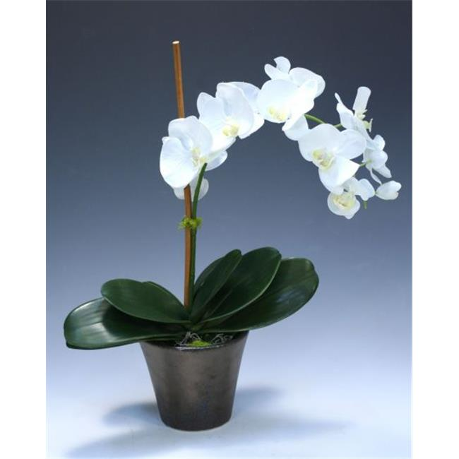 Distinctive Designs 9993 Cream White Phalaenopsis Orchid in Bronze Earthenware Pot - Neutrals