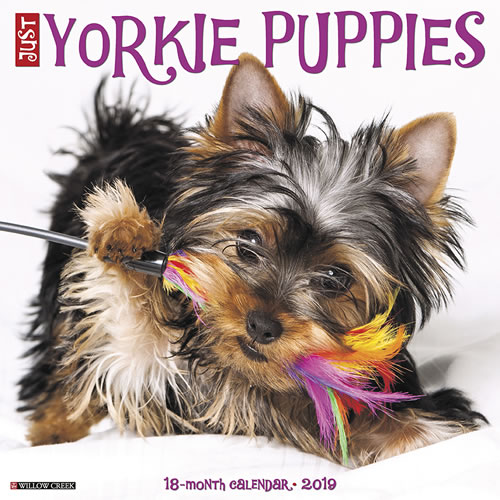 Willow Creek Press 2019 Just Yorkie Puppies Wall Calendar