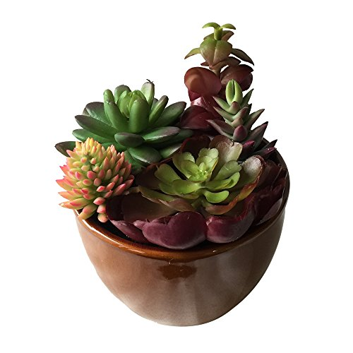 """Set of 2 - 6""""Ceramic Potted Artificial Faux Succulent Plants(NOT TINY 3"""" PLANTS)AIHY3012"""