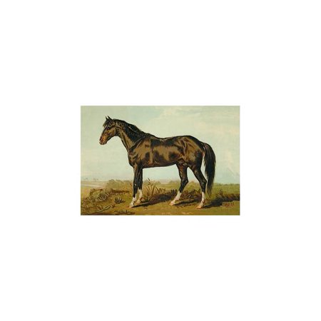 Dongola Horse Print (Unframed Paper Print 20x30)