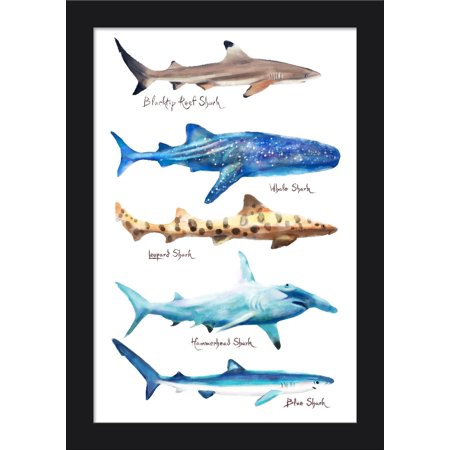 Shark Names - Watercolor - Lantern Press Artwork (12x18 Giclee Art Print, Gallery Framed, Black Wood) Alphabet Name Wood Frame