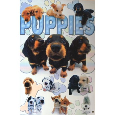 Puppies Collage Poster Amazing Cute & Funny New - Cute Funny Puppys