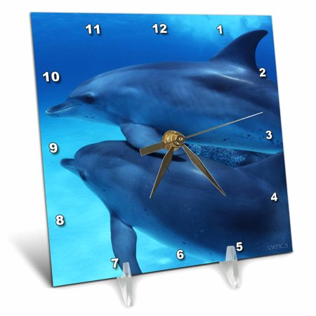 3dRose Two young dolphins, Stenella frontalis, swim together, Dophin Site, Bahamas, Desk Clock, 6 by 6-inch (Miami Dolphins Clock)