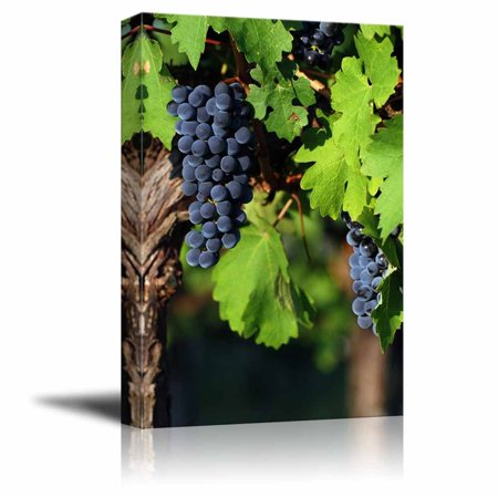 "wall26 Canvas Prints Wall Art - Italian Vineyard | Modern Wall Decor/Home Decoration Stretched Gallery Canvas Wrap Giclee Print. Ready to Hang - 12"" x 18"""