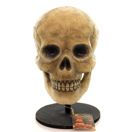 Halloween BONE HEAD Polyresin Skeleton Skullbuggery Td0570