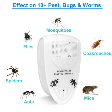 Pest Warrior Bed Bugs