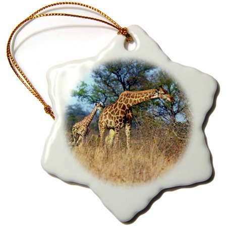 3dRose Cape Giraffe, Kruger National park, South Africa - AF42 MGL0024 - Miva Stock, Snowflake Ornament, Porcelain, 3-inch - Halloween Freddy Krueger Prank