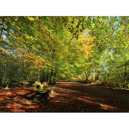 A Path Through Delamere Forest Framed by Trees in their Autumn Colour, Cheshire, England Print Wall Art By Garry Ridsdale ()