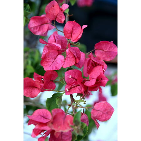 LAMINATED POSTER Flower Blossom Plant Macro Bloom Close Red Poster Print 24 x 36