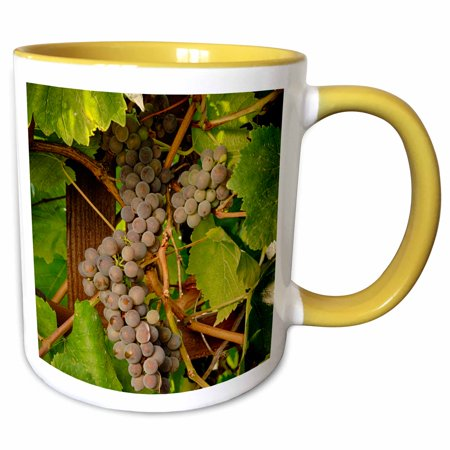 - 3dRose USA, Oregon, Keizer, Pinot Gris grape vineyard - US38 RBR0729 - Rick A Brown - Two Tone Yellow Mug, 11-ounce