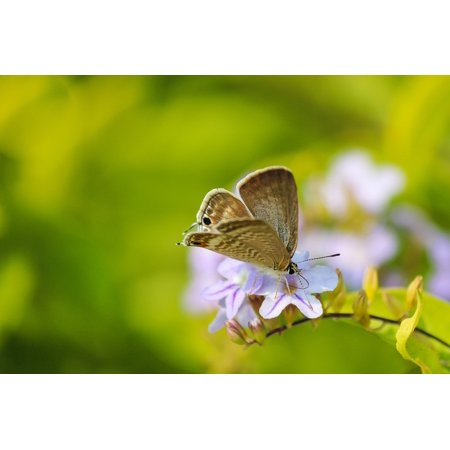 Laminated Poster Nature Insect Plant Flower Butterfly Green Poster Print 24 x 36