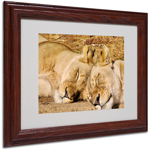 "Trademark Fine Art ""National Zoo - Lions"" Matted Framed Art by CATeyes"