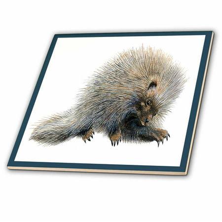 3dRose Cute Porcupine Framed in Blue - Ceramic Tile,