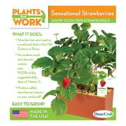 Sensational Strawberries Plant Kit