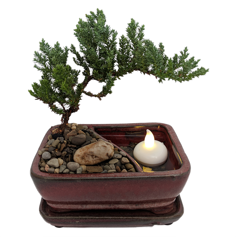 "Reflections Japanese Juniper Bonsai Tree Pot Saucer LED Floating Candle-6x4x2"" by"