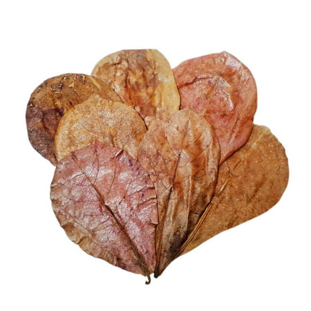 "Indian Almond Leaves 25pc 5""-7"" for Freshwater Shrimp, Bettas, Tropical Fish Aquariums & Terrariums …25pc 5""-7"""