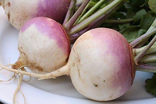 FOOD PLOT seed COMBO MAXI-RACK SUGAR BEET Purple Top TURNIP Big Dog RADISH