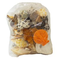 U.S. Shell 08011 Large Seashells World Mix - 5 lbs