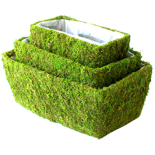 SuperMoss Real Moss Pot Planter Set (Set of 6)