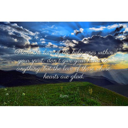 Rumi - Plant the love of the holy ones within your spirit; don't give your heart to anything, but the love of those whose hearts are glad - Famous Quotes Laminated POSTER PRINT