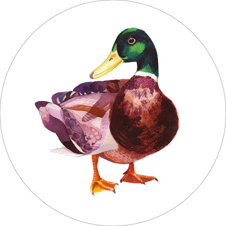 Mallard Duck Home Wall Shelf Decor Animal Decorations Watercolor Round Sign - 18 Inch](Duck Decor)