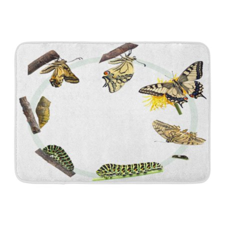 Butterfly Life Cycle Craft (KDAGR Green Caterpillar Life Cycle of The Swallowtail Butterfly Metamorphosis Doormat Floor Rug Bath Mat 23.6x15.7)