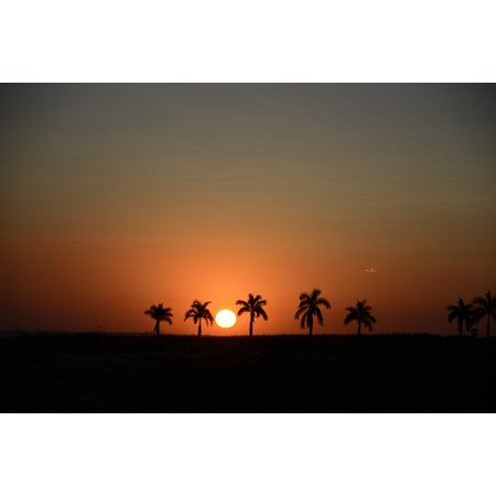 Peel-n-Stick Poster of Horizon Landscape Sunset Tree Sol Silhouette Poster 24x16 Adhesive Sticker Poster Print