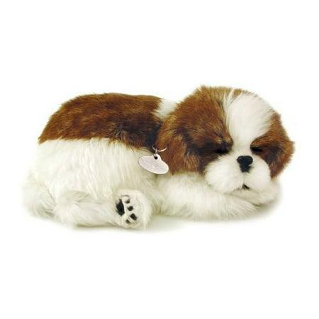 Shih Tzu Schnauzer - Shih Tzu Puppy By Perfect Petzzz